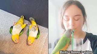 Birds of Paradise - Beautiful Birds Funny Video - Funny Birds Playing Moment You Must Love.