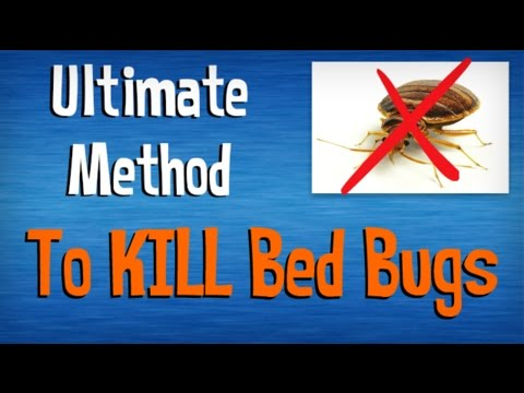 how to kill bed bugs fast | best advice on killing bed bugs