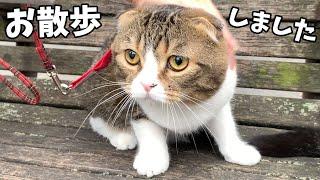 初めて親子猫でお散歩してみました♪