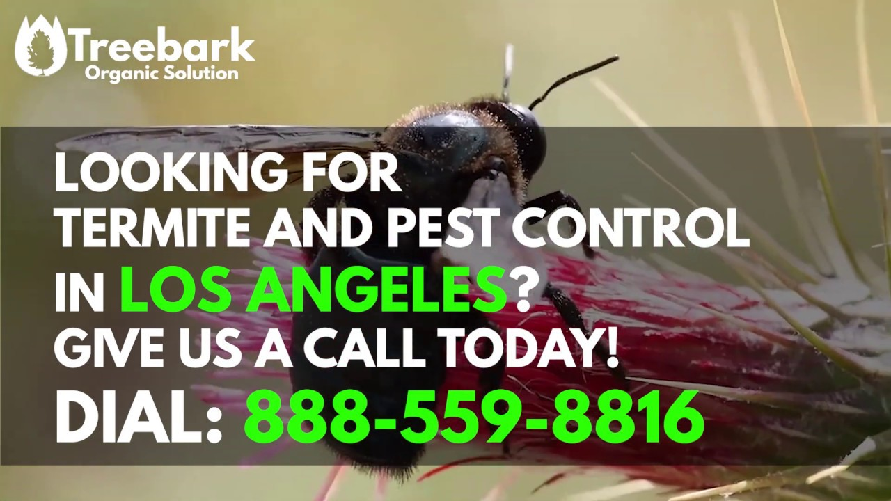 Termite Control Los Angeles | Treebark Termite and Pest Control Services