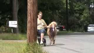 wheelchair trotting