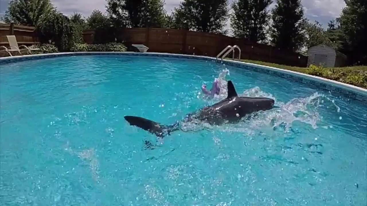 Toy Megalodon Shark