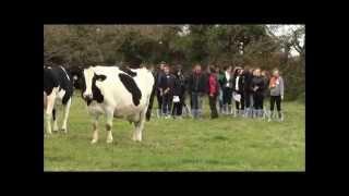 Découverte des métiers verts: l'élevage laitier avec robot de traite