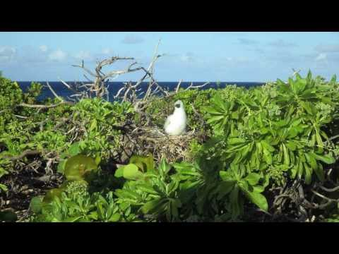 PG to Majuro Johnston Atoll part 3 of 5