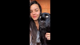 🐆 Funny and cute moments from the life of Panther Luna and Rottweiler Venza💗🐕