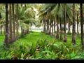 Coconut Farm For Sale 20 Acres Near By Gundlupet (8618143750)