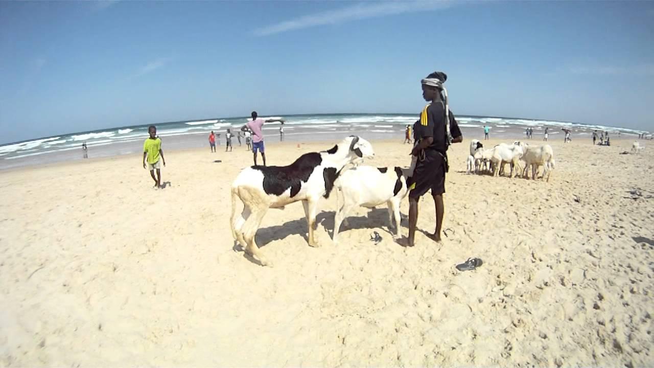 coitus on the beach