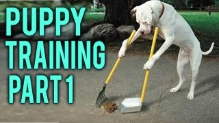How to potty training a puppy part 1