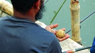 Big Catla Fish Hunting And Fishing Videos In Village Fishing Competition