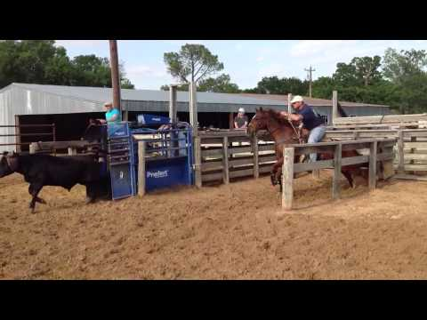 Sorrel Quarter Horse Gelding for Sale