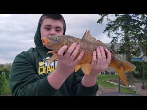 The Invasive Fish Of Lake Michigan