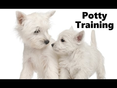 how to train a westie puppy not to bite