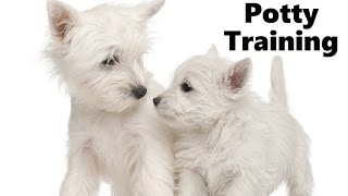 How To Potty Train A West Highland White Terrier Puppy - West Highland White Terrier Puppies