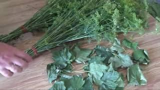 Заготавливаем ароматные(пряные) травы, специи для консервации.