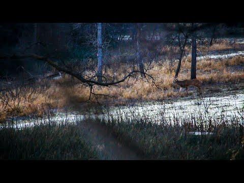 Public Land Bedding Area Bucks, HUNTING BEDDING AREAS