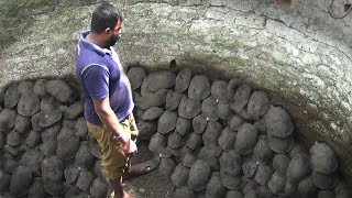 A group of Tortoise of one hundred eight (108) rescued from well !