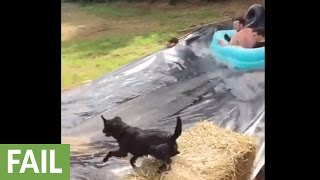 Dog gets blindsided by epic slip 'n slide tube