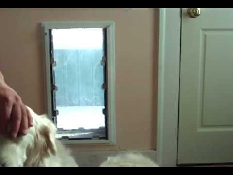 Security boss dog door video 3 youtube security boss dog door video 3 eventshaper