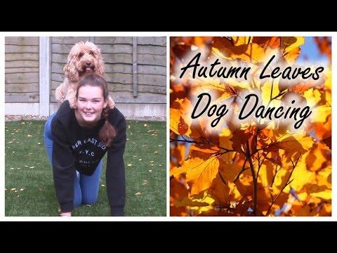 Autumn Leaves Dog Dancing  - Cockapoo Tricks