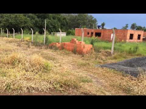 Efeito mata mato randap roundup 15 dias duas semanas herbicida handap