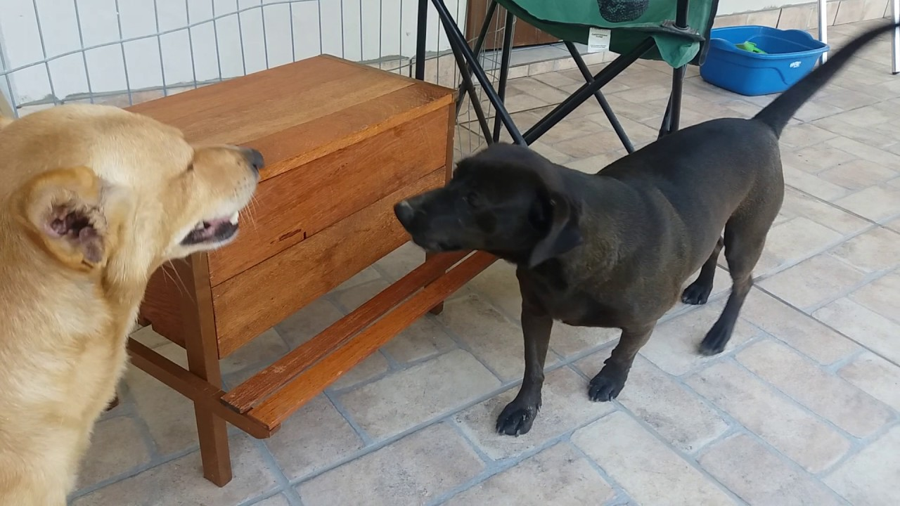 Comedouro para cachorro