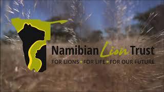 Namibian Lion Trust - World Lion Day 2020