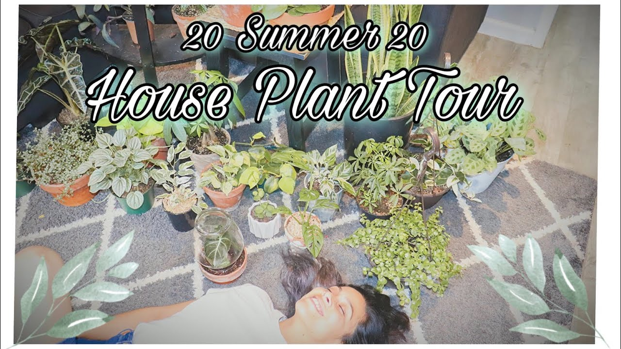 HOUSEPLANT TOUR SUMMER 2020 | Indoor Plant Collection | Plants for Small Place | Care & Tips Too