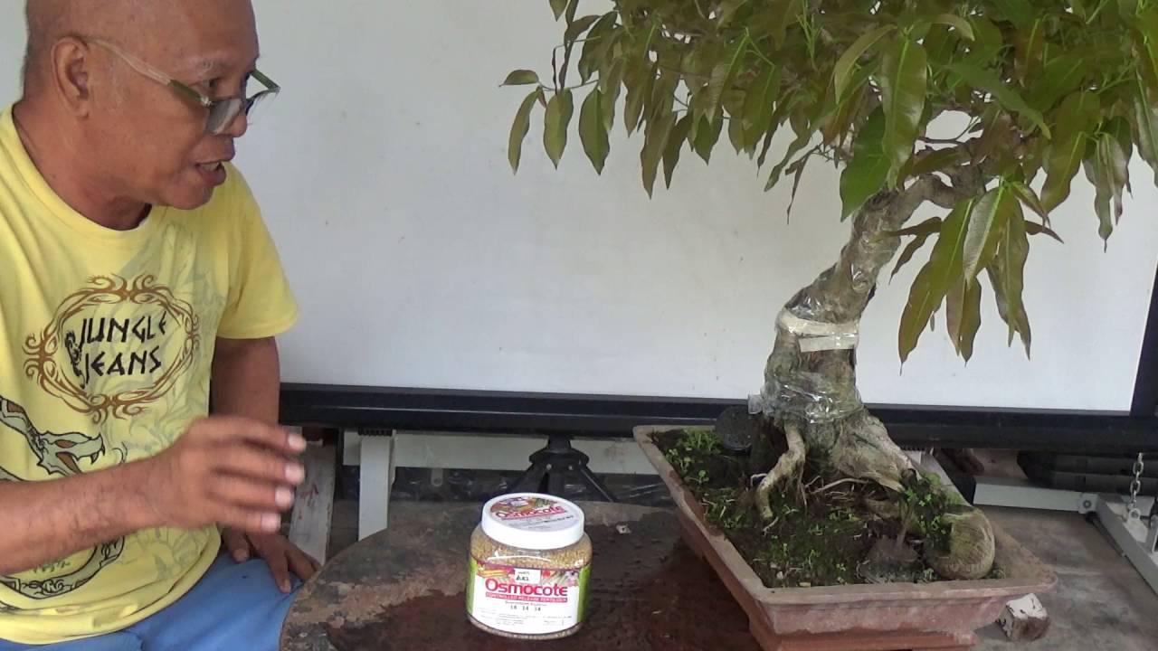 Bonsai Tutorials For Beginners Fertilizers Youtube