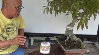 Bonsai Tutorials for Beginners: Fertilizers
