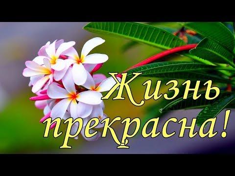 Доброе утро ! Жизнь прекрасна ! Красивое пожелание с добрым утром ! Открытка с добрым утром