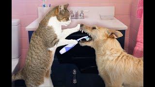 ПРИКОЛЫ С КОТАМИ И СОБАКАМИ 2021 Приколы со смешными животными Смешные котики Подборка 2