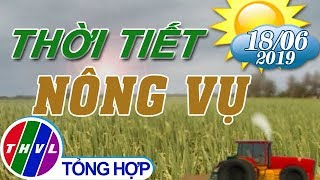 THVL | Thời tiết nông vụ 18h55 (18/06/2019)