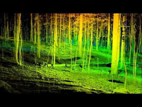 Terrestrial LiDAR Forest Transect
