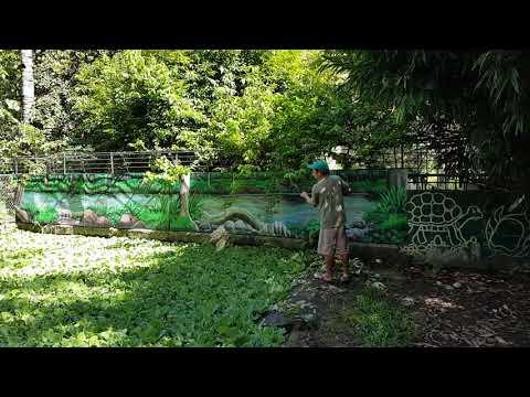 Feeding a huge saltwater crocodile