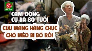 Clip cảm động 2018 | Cụ bà 80 tuổi cưu mang hàng chục con chó mèo bị bỏ rơi ở Sài Gòn