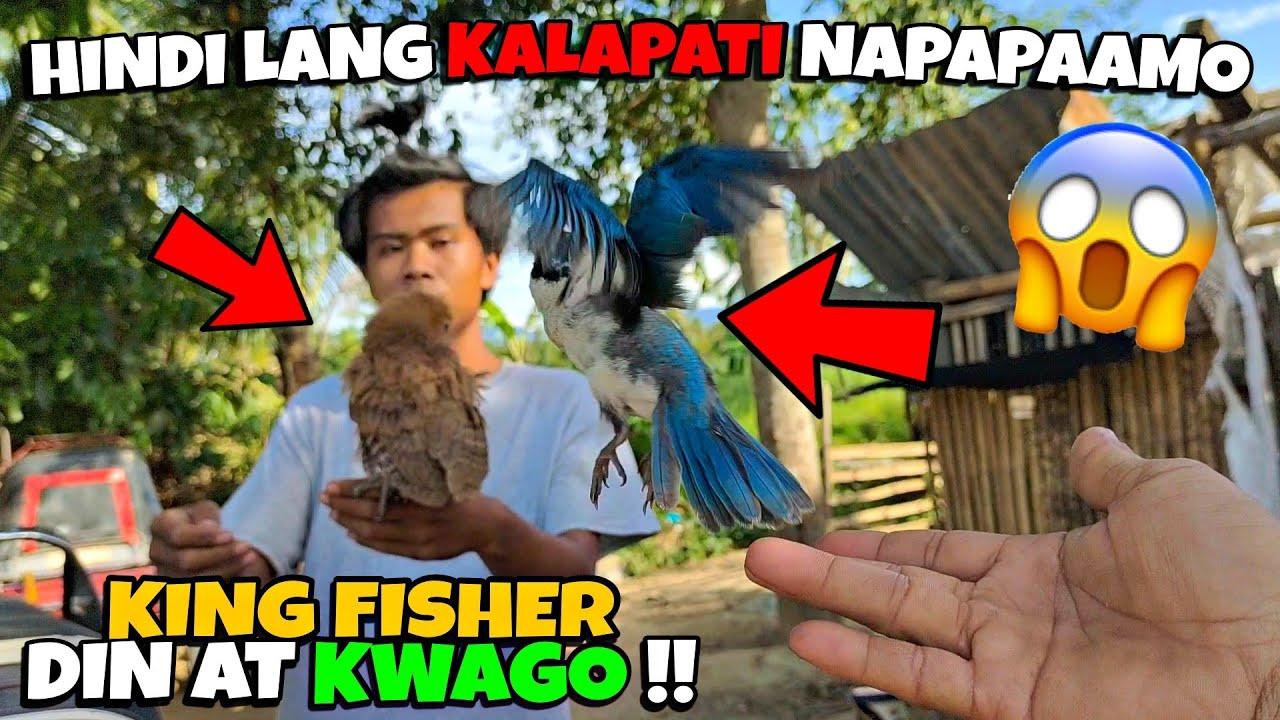 JUSKO SOBRANG GALING MAGPAAMO 😱 HINDI LANG KALAPATI, PATI KING FISHER AT KWAGO!