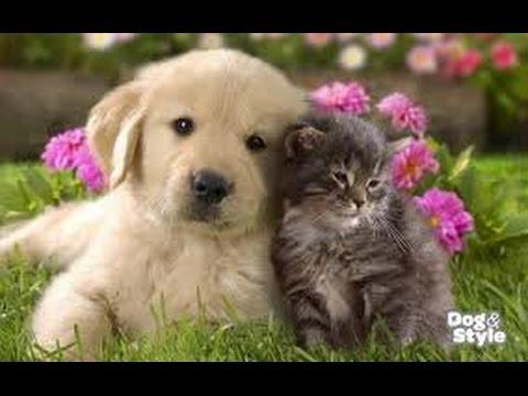 Ljubav Kuce I Mace
