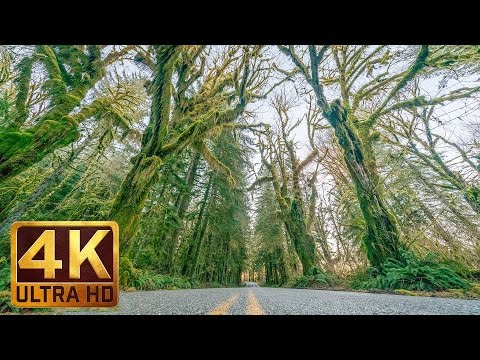 4K Scenic Drive | Upper Hoh Road, Olympic Peninsula - 2HRS Relaxation Video + Music