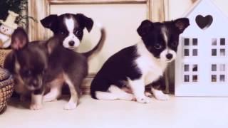 собачки, приколы про собак видео
