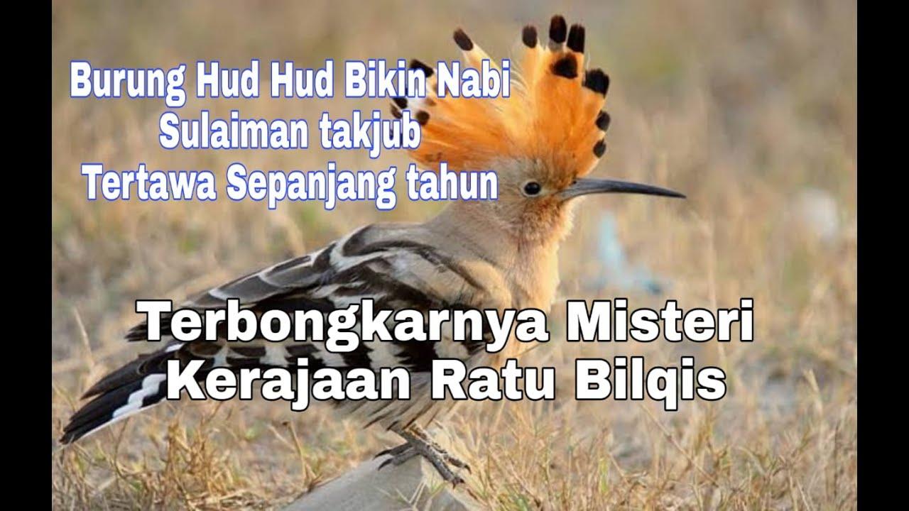 Nabi Sulaiman Tertawa Sepanjang Tahun Ulah Burung Hud Hud Kisah Jenius Jenaka Burung Hud Hud Youtube