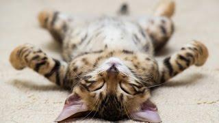 Los Gatos más Chistosos y Extraños - Gatos graciosos - Gatos divertidos - Gatitos raros