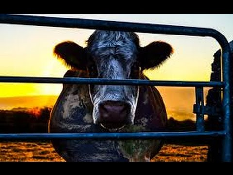 VODA - Krátké video z dokumentu Cowspiracy