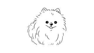 как нарисовать шпица,how to draw a spitz,cómo dibujar un perro de Pomerania,come disegnare un spitz(Небольшая комнатная собака с пушистой шерстью. a dog of a small breed with a pointed muzzle, especially a Pomeranian. Thank you. Subscribe to our..., 2016-11-22T18:47:22.000Z)