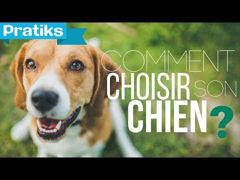 choisir un chien