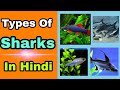 Types of shark in hindi by aquarium care,  shark fish ke types in hindi, Aquarium care in hindi