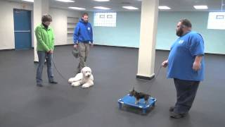 Real World Dog Training - Real Client Results
