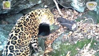видео Флора и фауна региона Краснодарский край