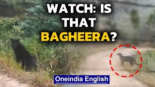Black panther video: Is it Jungle Book's Bagheera? | Oneindia News