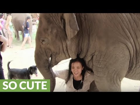 Elephant incredibly shows deep affection for human friend