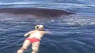 Humpback Whale Shows AMAZING Appreciation After Being Freed From Nets thumbnail